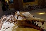 埃及沙漠深处的古鲸博物馆