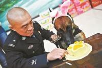 北京市公安局办警犬集体生日会 吃特制蛋糕