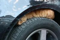 小动物钻车底取暖 它们造成的车损 保险公司赔吗?