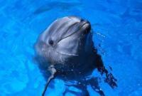 日本47岁海豚过世 被人类饲养逾42年破纪录