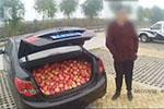 三男子应急道上停车 趁大雾半小时内偷摘480斤苹果