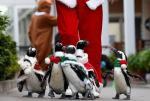 """萌翻!日本举行""""企鹅圣诞大游行"""""""