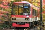 """列车穿越京都""""红叶隧道"""" 诗意唯美"""