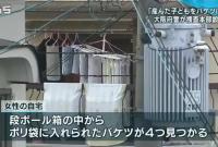 残忍!日本一母亲将4名新生儿扔进水桶弃尸20年