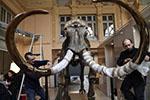 冰河时期猛犸象骨架将拍卖 拍价或达50万欧元