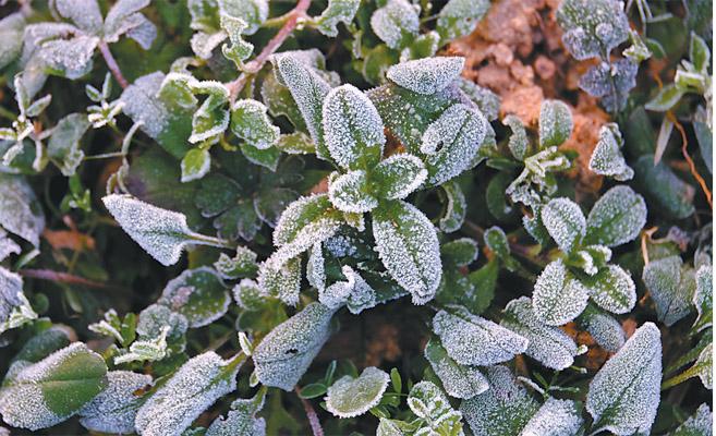 冬日浓霜 美不胜收