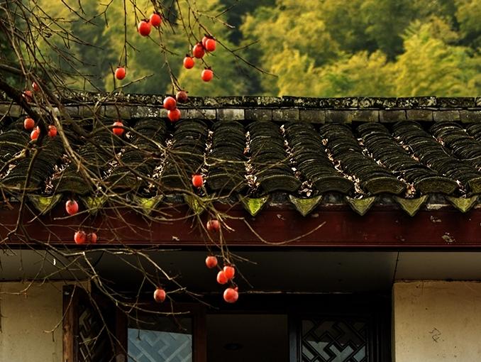 初冬的杮林村