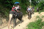 泰国大象骑行项目存风险 游客需谨慎