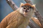 英国一野生动物园凌晨起火 13只赤猴葬身火海