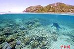 绿海龟因海水暖化全变雌性 或致绝种