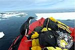 """萌!南极科考队出海采样 企鹅""""登船考察"""""""