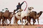"""沙特举行骆驼选美赛 12只骆驼因""""整容""""出局"""