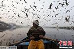 印度亚穆纳河一景:船夫摇橹河上 水鸟齐飞天际