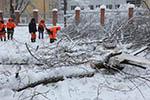 莫斯科百年一遇降雪1死多伤 树倒砸车事件百余起