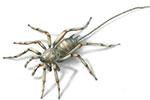 """一亿年前缅甸琥珀中现神秘""""长尾蜘蛛"""""""