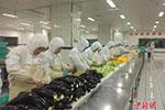 探秘高铁盒饭生产基地:日产两万份 素食套餐将面世