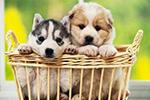 闹心!春节回家过年 找个寄养宠物的地方咋就这么难?
