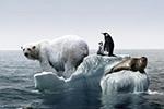北极出现史上最高温2℃ 比往年高30度震惊科学家