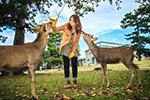 日本奈良鹿咬伤游客事件破纪录 其中超6成系中国游客