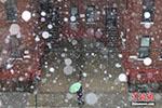 """极端天气又来民众叫苦不迭 美东北部遇""""雷打雪"""""""