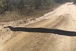 """小心驾驶!南非司机乡间路遇""""减速带"""" 走近后发现是巨蟒"""