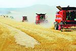 美媒:中国研究人员发现农业奇迹 可能会养活地球