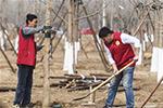 世界森林日:植树护绿在行动