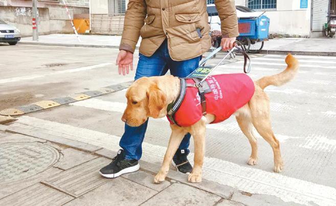 宁波第一只有工作证的导盲犬杜克 认识一下