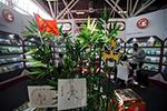 中国主宾国活动亮相博洛尼亚国际童书展