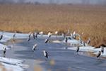 """中国""""最北""""湿地迎来今年首批候鸟"""