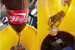 可口可乐瓶中现死老鼠?!