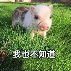 """联发彩票网怎么玩:哈哈哈!""""小猪佩奇""""出事了!大学生因寝室内养猪被通报"""