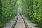 """南京警方劝游客别去""""爱情隧道"""":就这么一条铁路两排树"""
