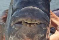 美南卡罗莱纳州发现怪鱼牙齿似人类