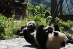 """藏在绿水青山间的大熊猫""""幼儿园"""""""