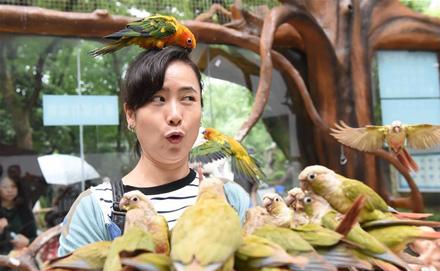重庆动物园鹦鹉苑开园 人鸟亲密接触