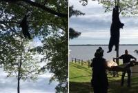 """黑熊爬上20米高树顶被消防员用""""绳降""""救下"""
