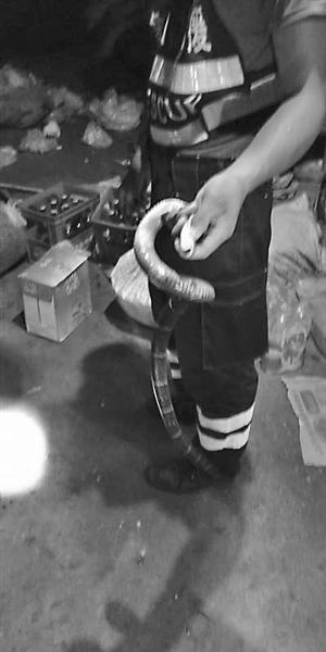 皇家彩票网投信誉平台:开门一看_地上有条眼镜蛇!象山杂货店老板着实吓了一跳