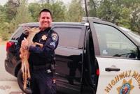 被林火围困获救后 加州这只小鹿给了警长一个吻
