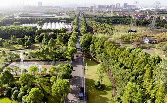 航拍蛟川生态园 如同一块巨大绿毯