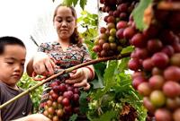 特色种植为乡村振兴注入活力