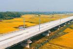 泰和赣江特大桥如巨龙穿越金色稻田