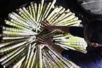 贵州赤水:5万余亩大竹笋迎来收获季