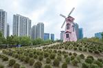 杭州网红花海3天被踩成荒地 管理人员无奈全割了