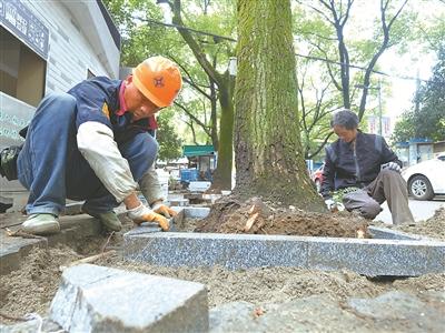 丹凤社区 修整170个树池