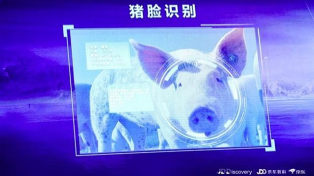 """【云涌晨报】京东金融品牌升级,推出""""猪脸识别"""";拼多多黄峥:山寨名牌已全清理"""