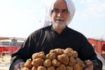 科威特:新鲜松露惹人爱