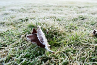杭州:西湖初霜