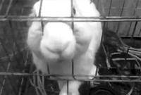 兔子真的会咬人!杭州一岁半女孩喂兔子被咬断无名指