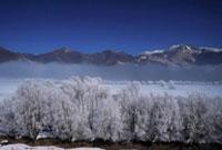 西藏:雅江现雾凇奇观